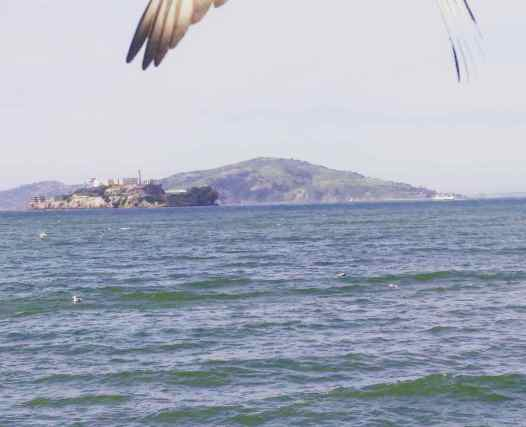 Picture of Alcatraz photobombed by a bird